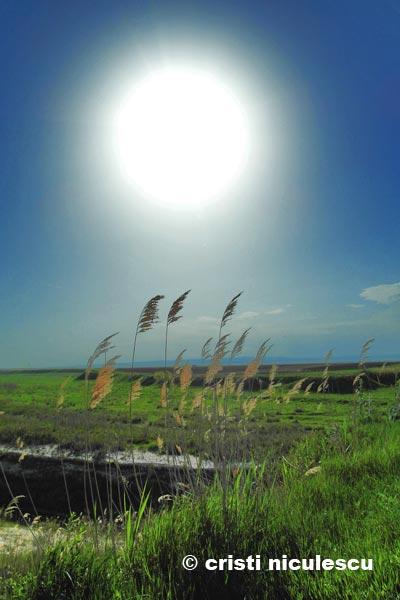 soare-la-firul-ierbii