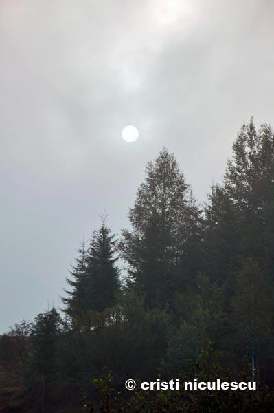luna,-dincolo-de-brazi