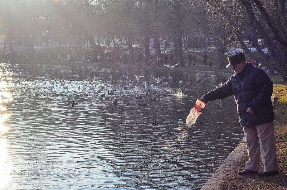 feeding-seagulls