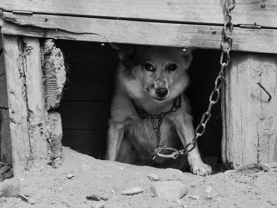 În cușcă